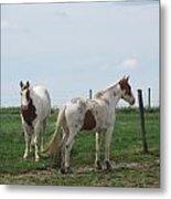 Breed Horses Metal Print