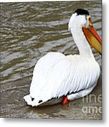 Breeding Plumage Metal Print