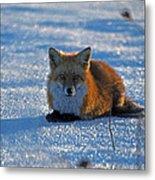 Brer Fox Metal Print