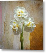 Bridal Crown Narcissus Square Metal Print