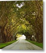 Bridge Road Banyans Metal Print