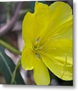 Bridges Evening Primrose Metal Print
