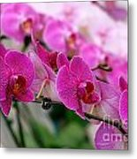 Bright And Purple Butterfly Orchids Metal Print