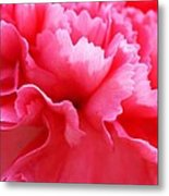 Bright Carnation Metal Print