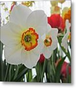 Bright Daffodils Metal Print