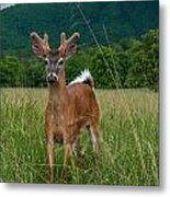 Bright Eyed And Bushy Tail Metal Print