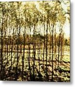 Bright Forest - Bosque Luminoso Metal Print