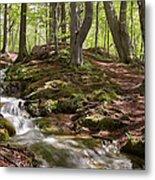 Bright Forest Creek Metal Print