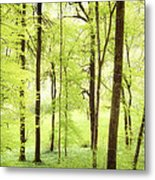 Bright Green Forest In Spring With Beautiful Soft Light  Metal Print
