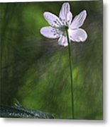 Bright Light Flower Metal Print