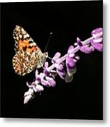 Painted Lady Butterfly On Purple Flower Metal Print