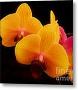 Bright Orchids Metal Print