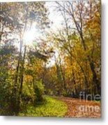 Bright Path Metal Print