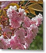 Bright Pink Apple Tree Flowers Metal Print