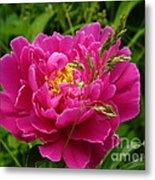 Bright Pink Blossoms Metal Print