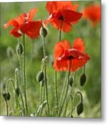 Bright Poppies 1 Metal Print