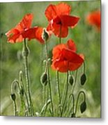 Bright Poppies 2 Metal Print