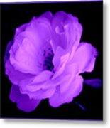 Bright Purple Perfection Metal Print