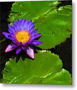 Bright Purple Water Lilly Metal Print