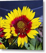 Bright Summer Flower  Metal Print