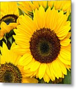 Bright Sunflower Blossoms Metal Print
