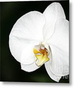 Bright White Orchid Metal Print