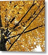 Bright Yellow Leaves Metal Print