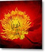 Bright Yellow Poppy Center Metal Print