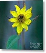Bright Yellow Wildflower Metal Print