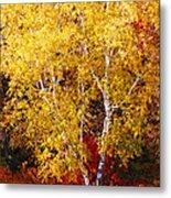 Brilliance Of Autumn On Rib Mountain Metal Print