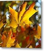 Brilliant Autumn Light And Color Metal Print