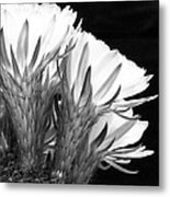Brilliant Blossoms Diptych Right Metal Print