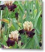 Brilliant Disguise Iris Metal Print