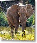 Brilliant Elephant Metal Print