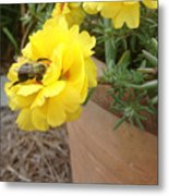 Brilliant Rose Flower With Buzzy Bee Metal Print