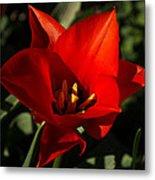 Brilliant Spring Sunshine In Red  Metal Print