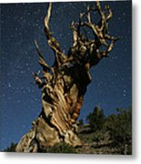 Bristlecone By Moonlight Metal Print