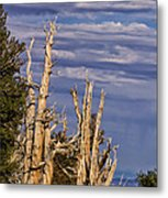 Bristlecone Warriors Metal Print
