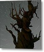 Bristlecone With Star Trails Metal Print