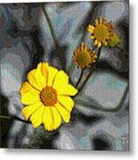 Brittle Bush Flowers In December Metal Print