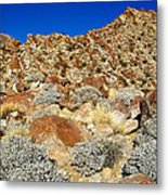 Brittlebush Leaves And Santa Rosa Mountains From Borrego Palm Canyon In Anza-borrego Desert Sp-ca Metal Print