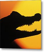 Broad-snouted Caiman  Metal Print