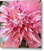 Bromeliad Close Up Pink Metal Print