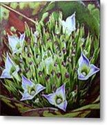 Bromeliad In Bloom Metal Print by Urszula Dudek