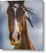 Bronze Beauty Metal Print