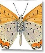 Bronze Copper Butterfly Metal Print