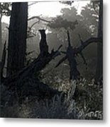 Brooding Forest Metal Print