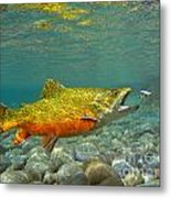 Brook Trout And Coachman Wet Fly Metal Print