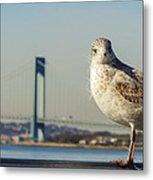 Brooklyn Seagull Metal Print