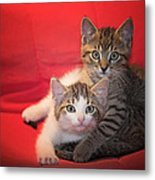Brothers Kittens Metal Print